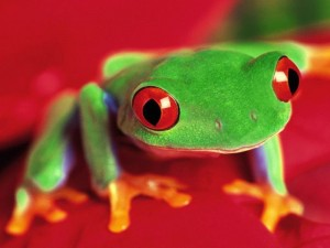 This would be a green frog